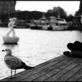 Fotografía © Elena Figoli
